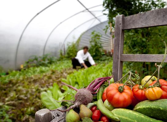 Organic Italian Toscana Garden Dublin