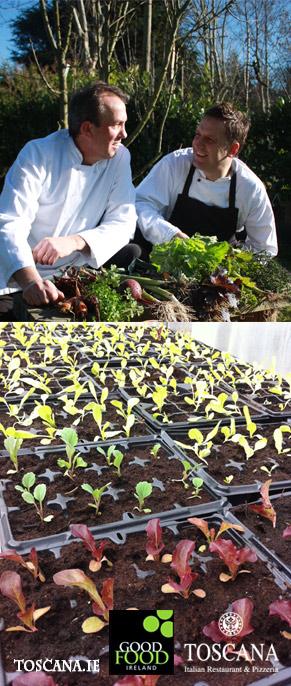 Award Winning Organic Food and Top Growing Tips - Toscana Italian Restaurant